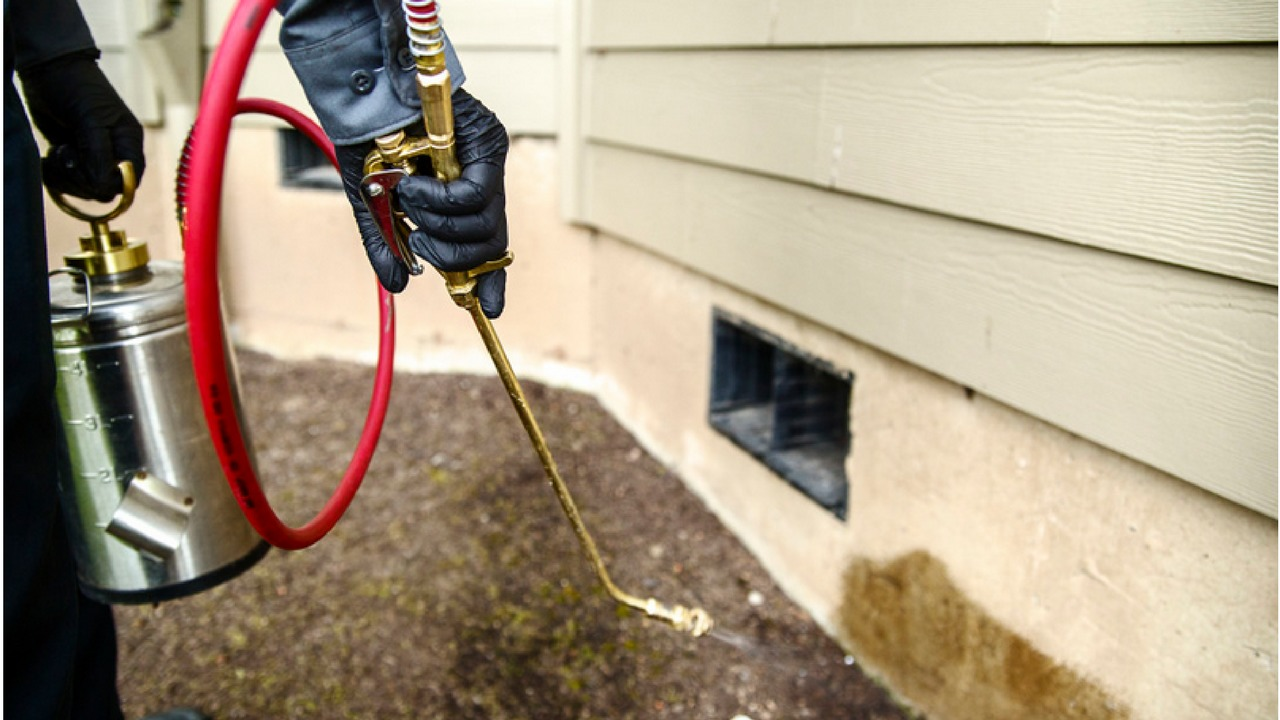 Referrals For Choose The Right Pest Control Sydney Service - Pest Control