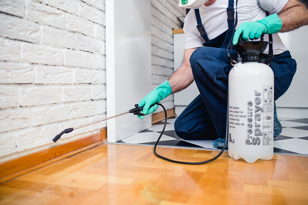 Referrals For Choose The Right Pest Control Sydney Service – Pest Control